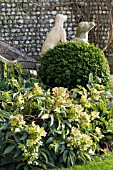 HELLEBORUS ANGUSTIFOLIUS,  STEPS TO WEST DEAN COLLEGE,  FEBRUARY