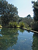 VIEWS ACROSS THE POND,  ABBOTSBURY SUB TROPICAL GARDENS