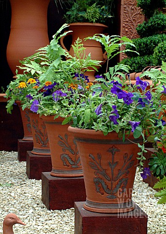 ROW_OF_LARGE_PATTERNED_TERRACOTTA_POTS__MIXED_PLANTINGWHICHFORD_POTTERY