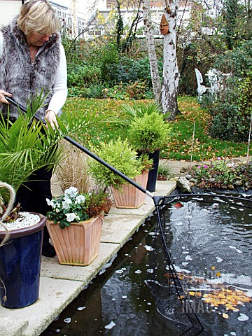 REMOVING_LEAVES_WITH_NET_FROM_POND_IN_WINTER