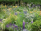 ACHILLEA TERRACOTTA  ROSA RHAPSODY IN BLUE  AGAPANTHUS  KNIPHOFIA  ECHINOPS RITRO VEITCHS BLUE AND GRASSES